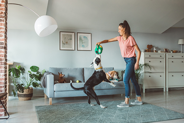 Woman playing with dog at hom