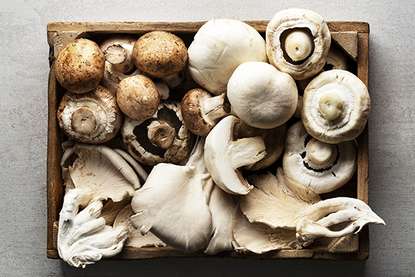 variety of edible mushrooms