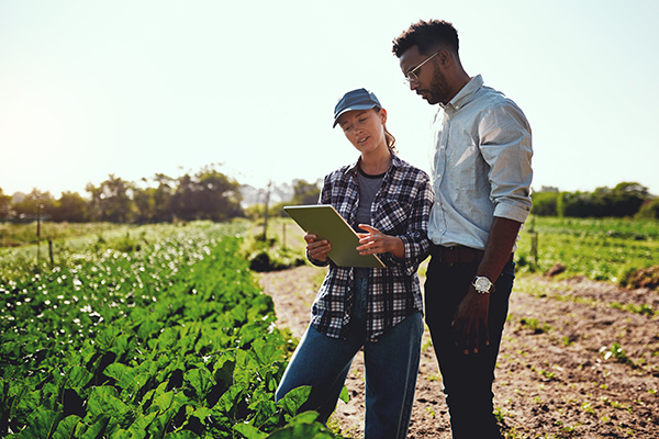 Two young farmers look at the board in the farm field