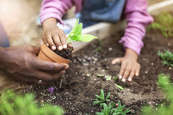 father and daughter planting potted plant in garden