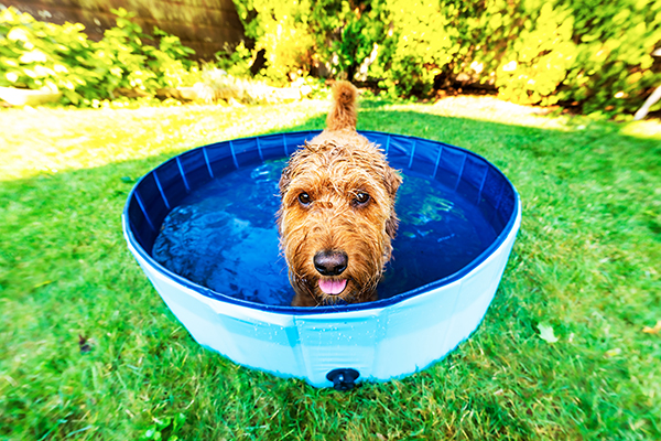 Dog in kiddie pool filled with water