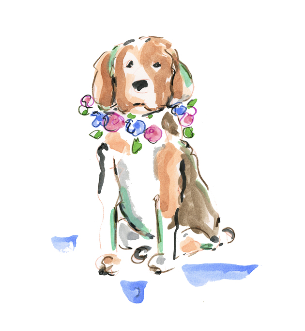 Beagle etsy c blog