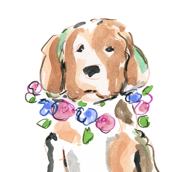 Beagle etsy d blog