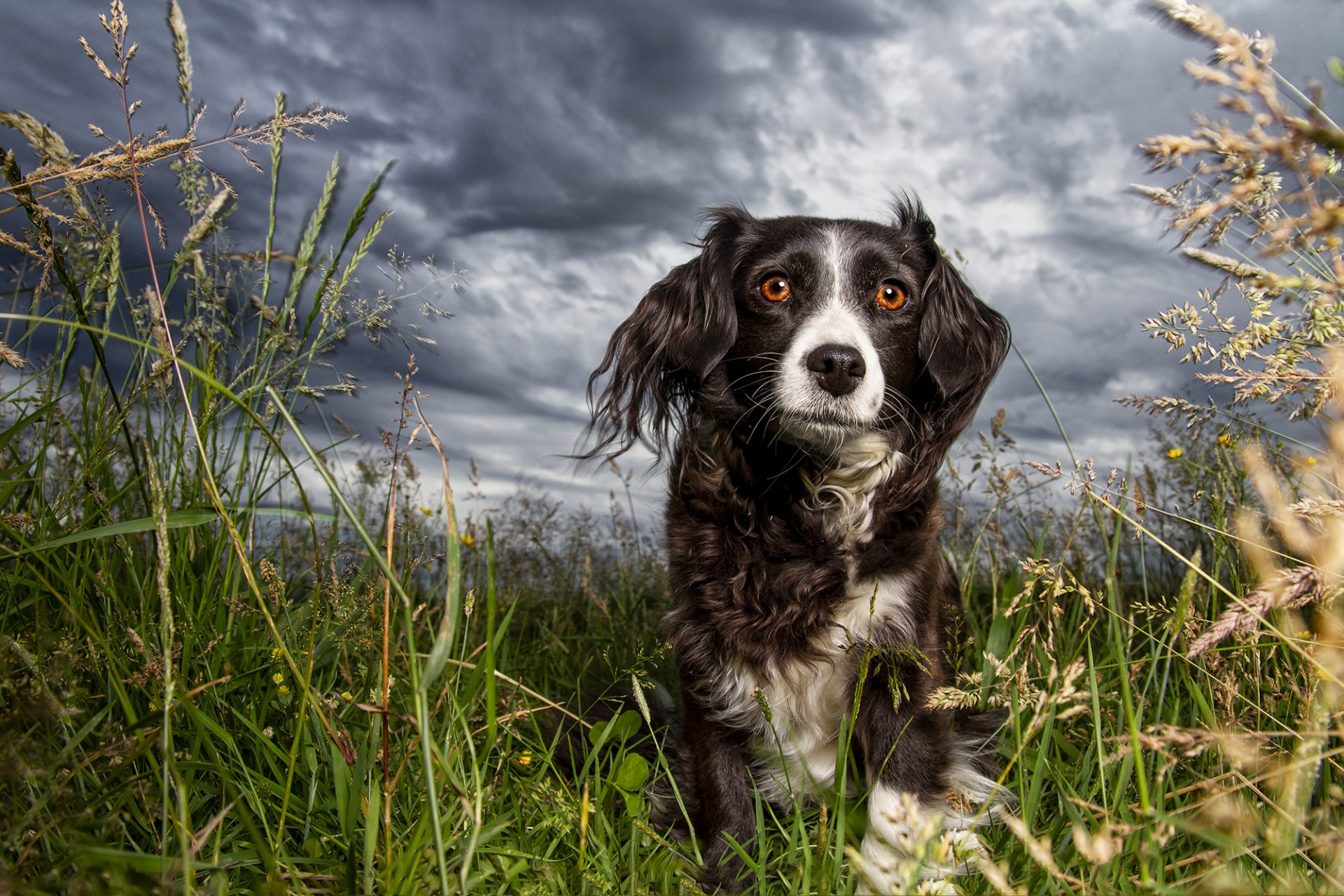 Mixed Breed Dog in dramatic cloudy skies
