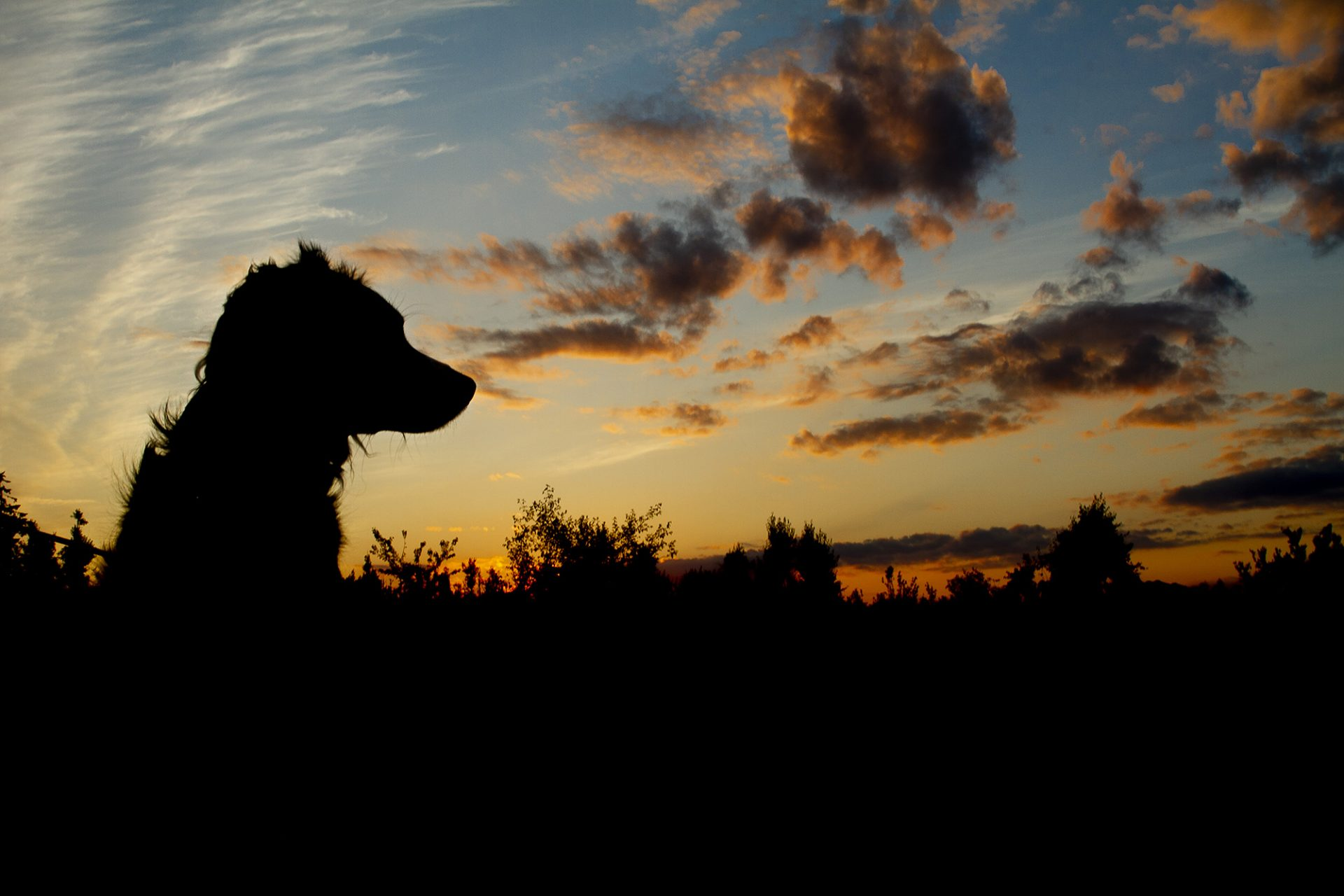 Small silhouette of dog in beautiful sunset
