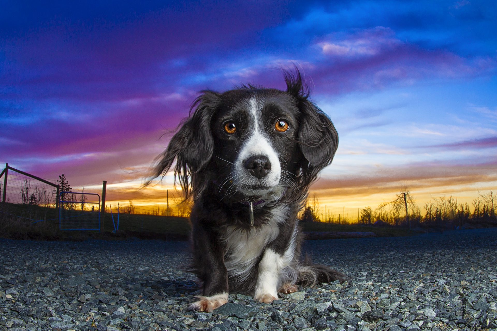 Small Mixed breed dog in beautiful sunset