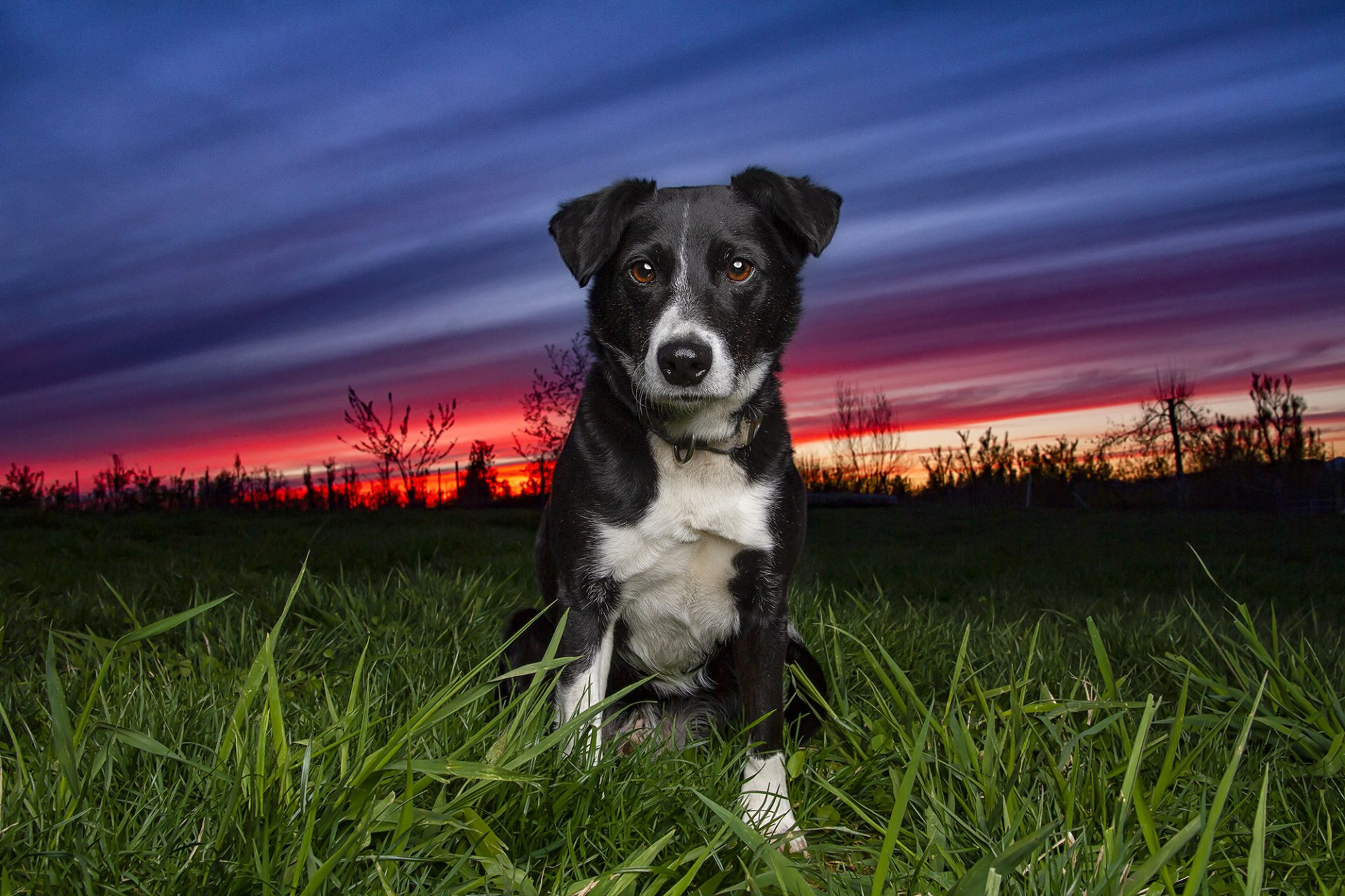 mixed breed dog in beautiful sunset