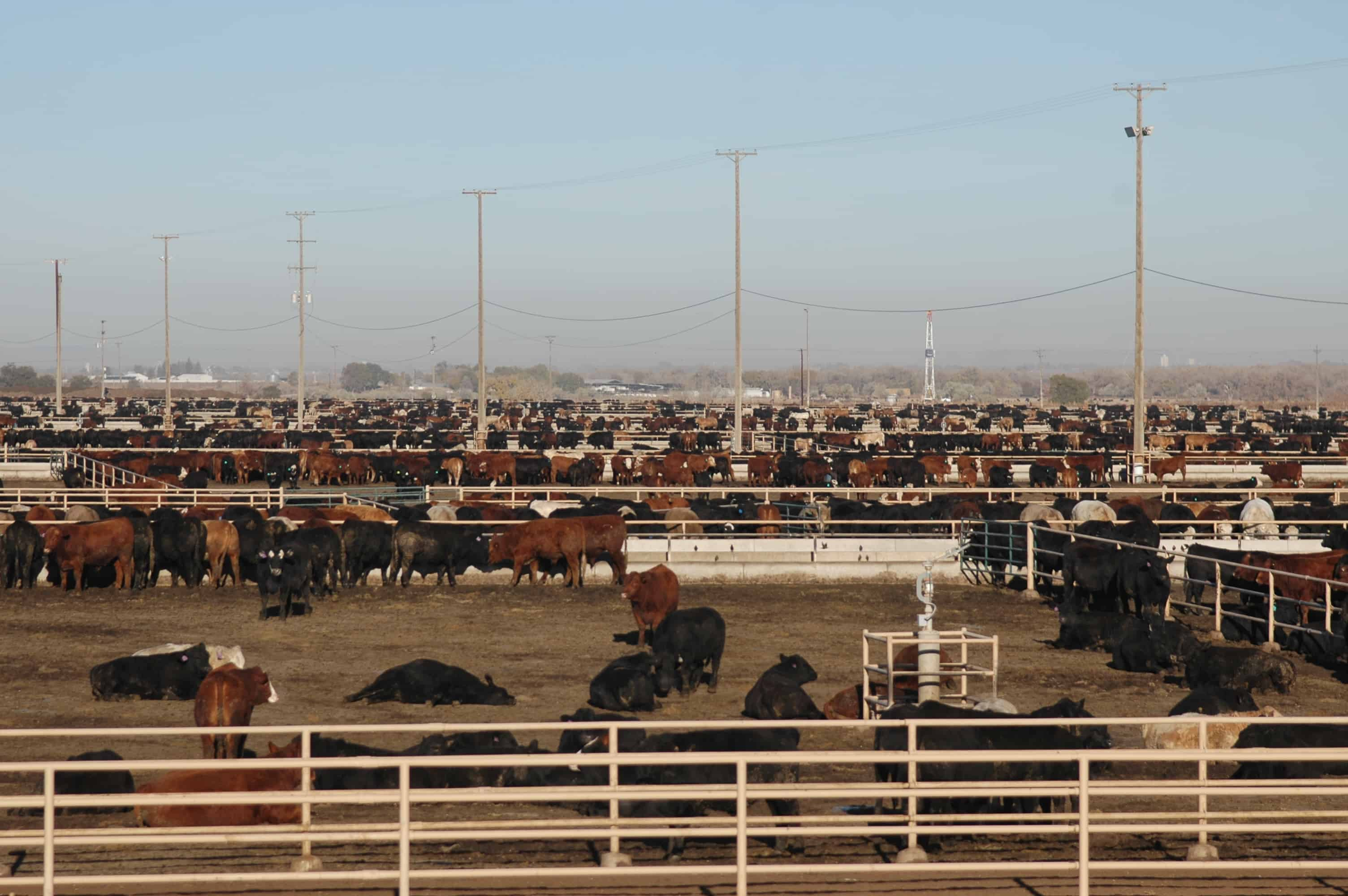 JBS feedlot in Kersey, Colo.