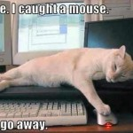 cats never stop chasing mice