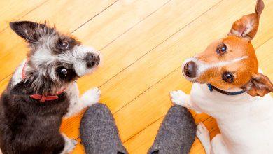 Photo of ¿Tienes mascotas? ¡Hoy es tu día!