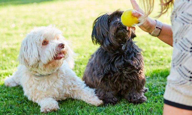Photo of Obediencia canina: Reglas para evitar mordidas