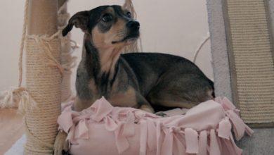 Photo of Pasos para hacer una cama para perrito con Almohada Sognare®