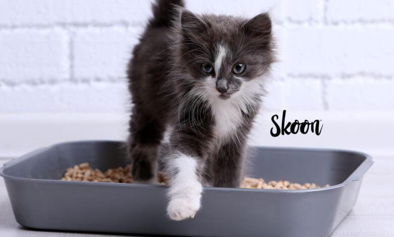 Photo of Tips Skoon: entrenar a tu gatito para usar un arenero