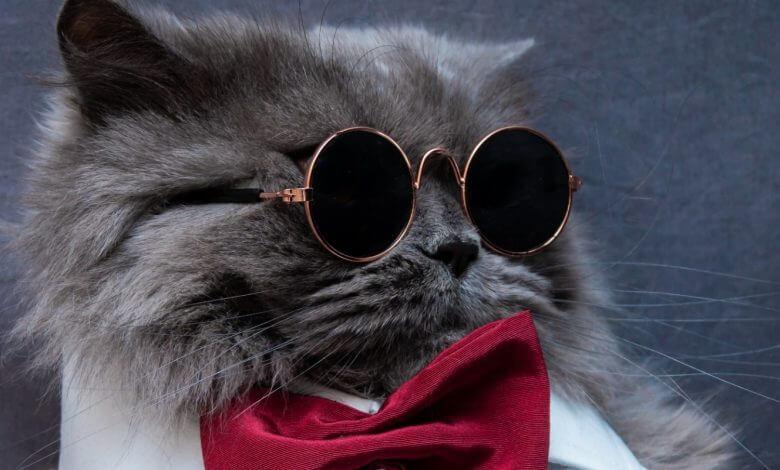 Photo of 12 datos curiosos que no sabías que los gatos