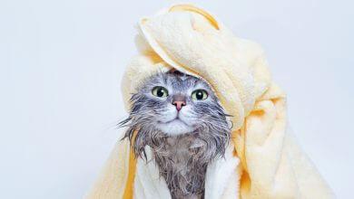 Photo of Los mejores tips para bañar a tu gato en casa