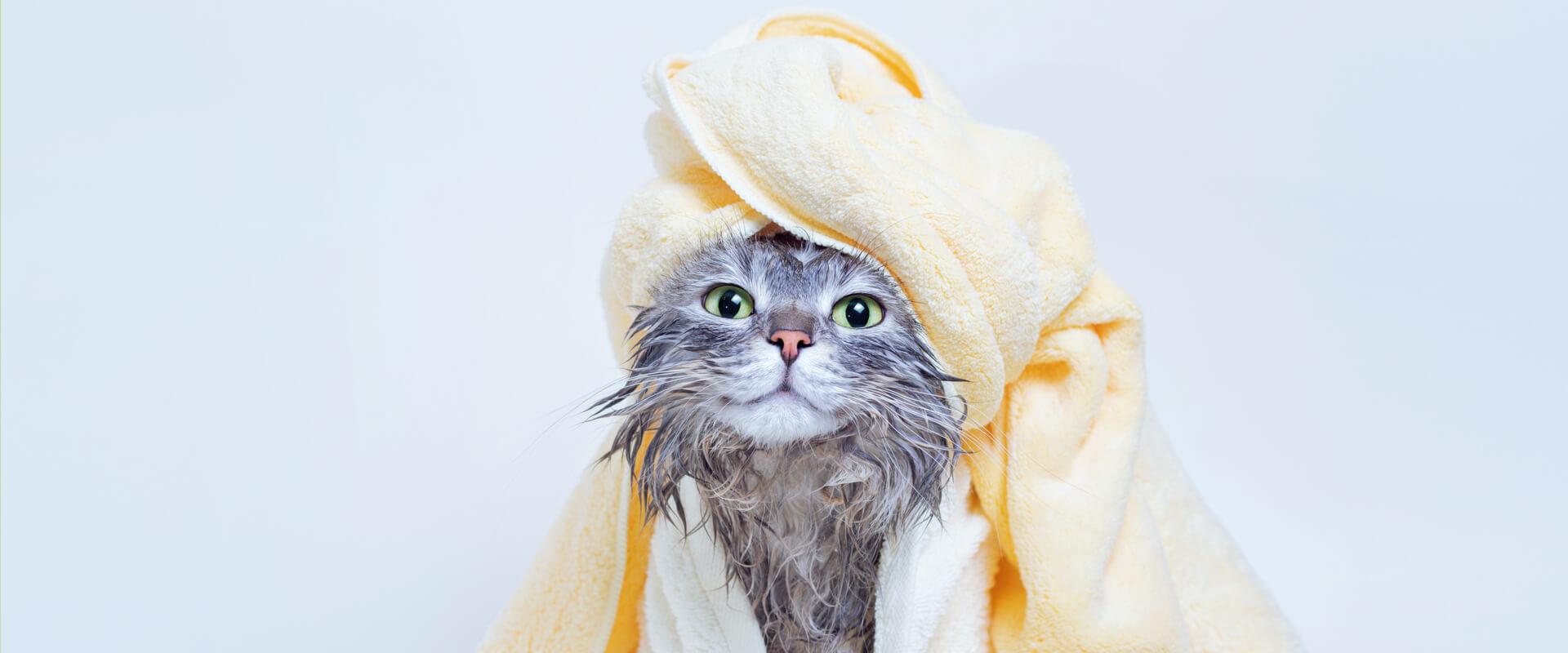 Gato saliendo de un baño