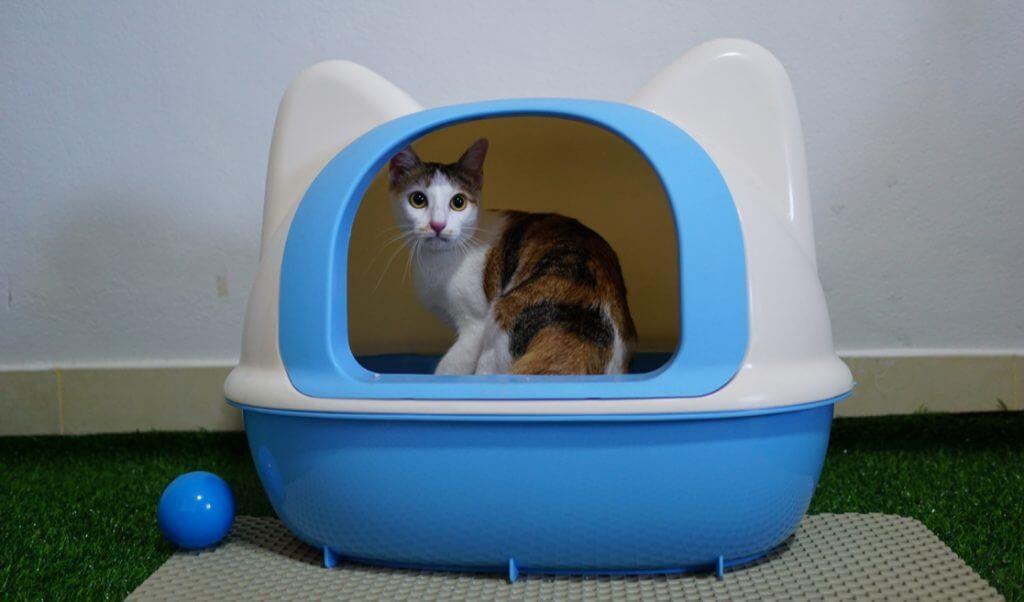 Caja de arena para gato con puerta