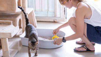 Photo of Caja de arena para gatos ¿por qué es necesaria?