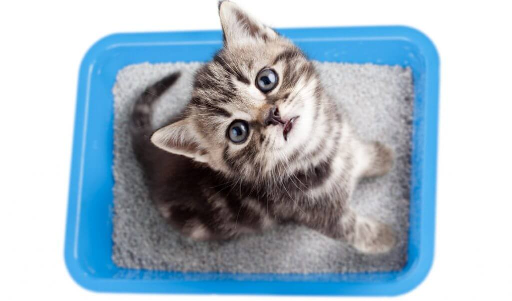 Gatito en caja de arena