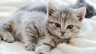 Photo of ¡Nueva arena para gatos Skoon® ultra absorbente!