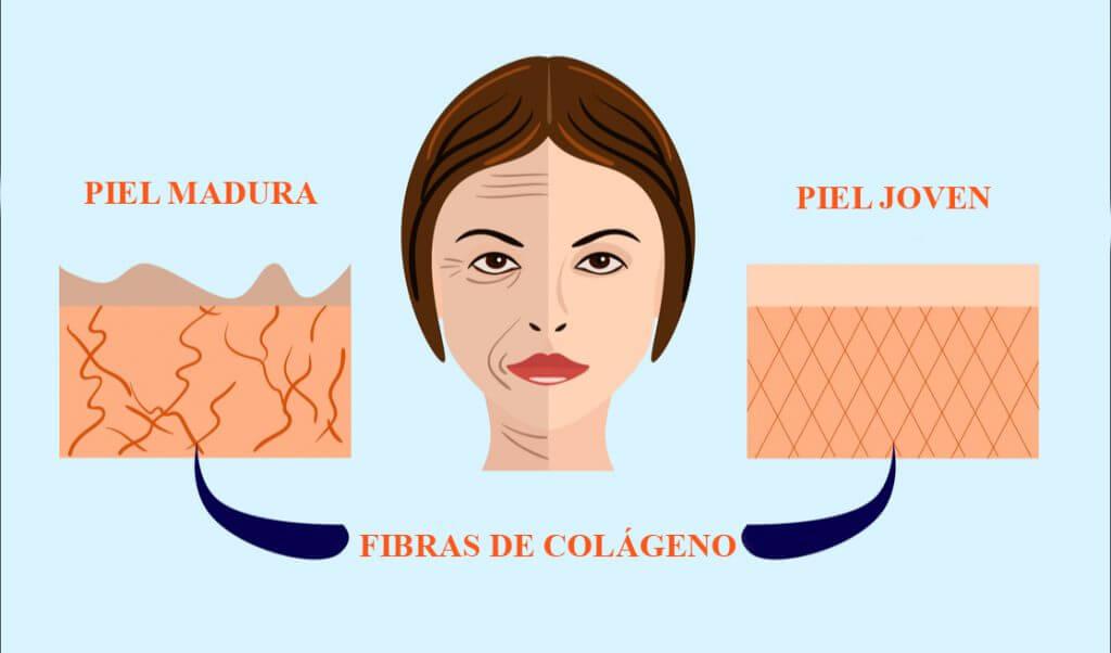 El colágeno en la piel