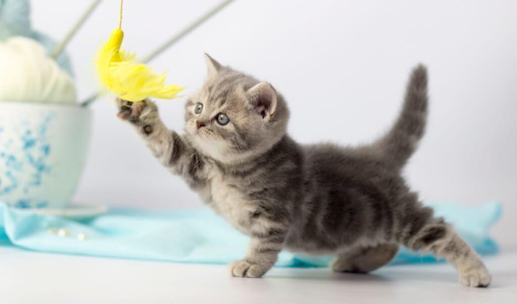 Gatito jugando