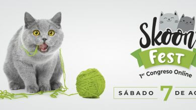 Photo of El SKOON FEST celebra a los gatos este 7 de agosto