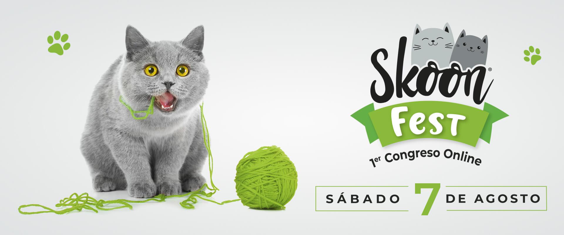 Skoon Fest congreso online