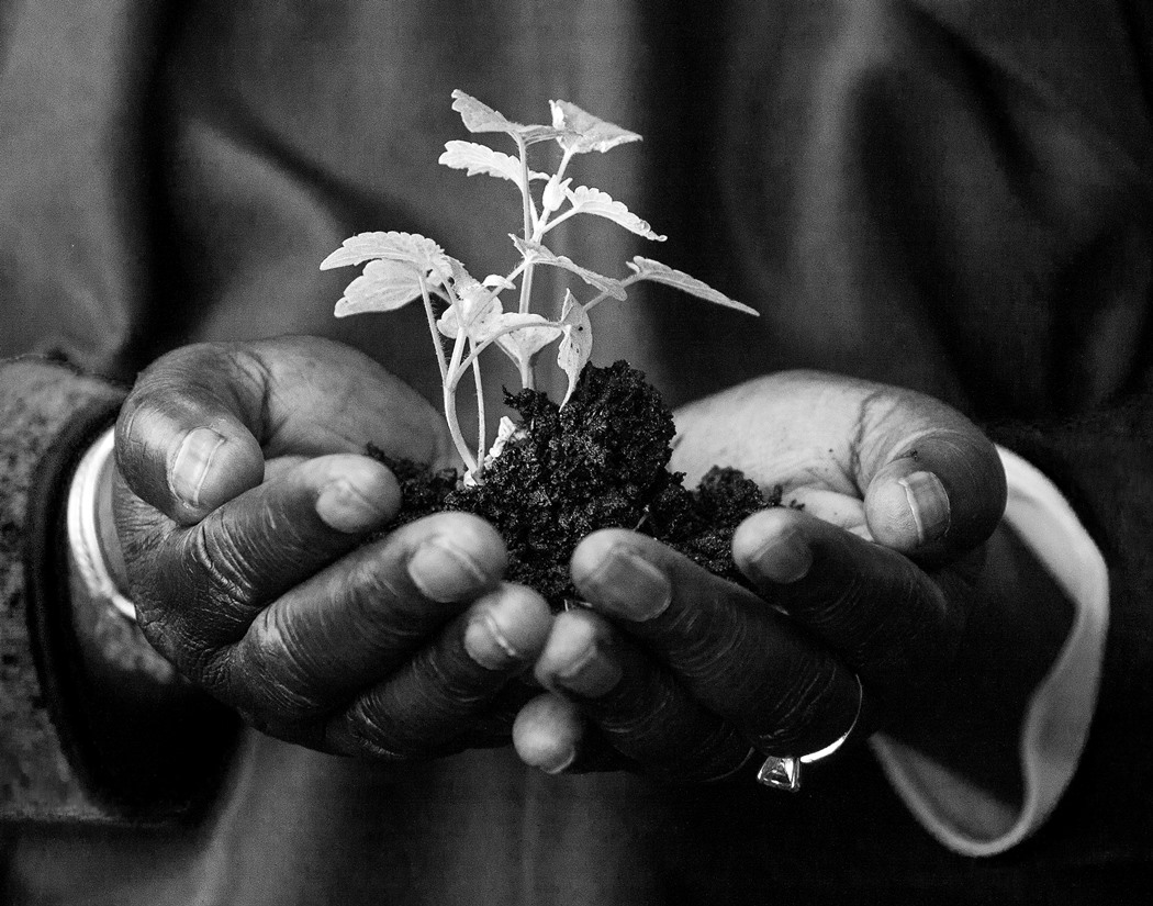 Elder Mary's hand with a plant
