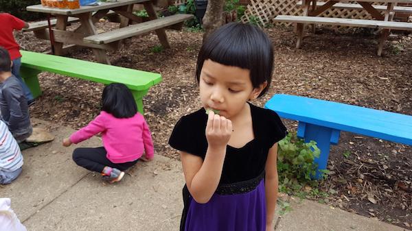 Kindergarten Student Trying Nasturtium