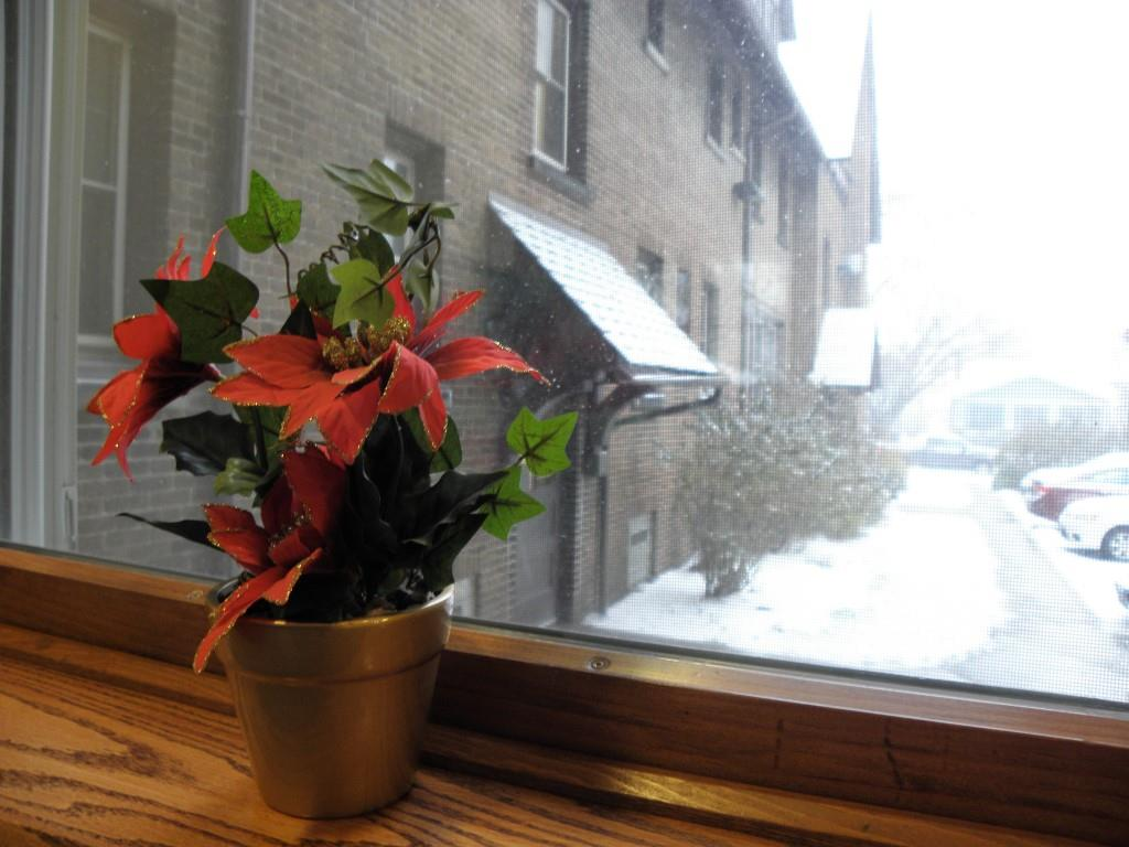 poinsetta in window Dec. 12, 2017