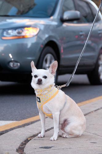 Yellow gray dot harness