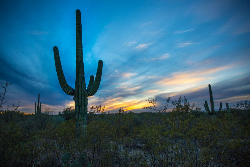 BlueSkyTraveler Tucson Arizona