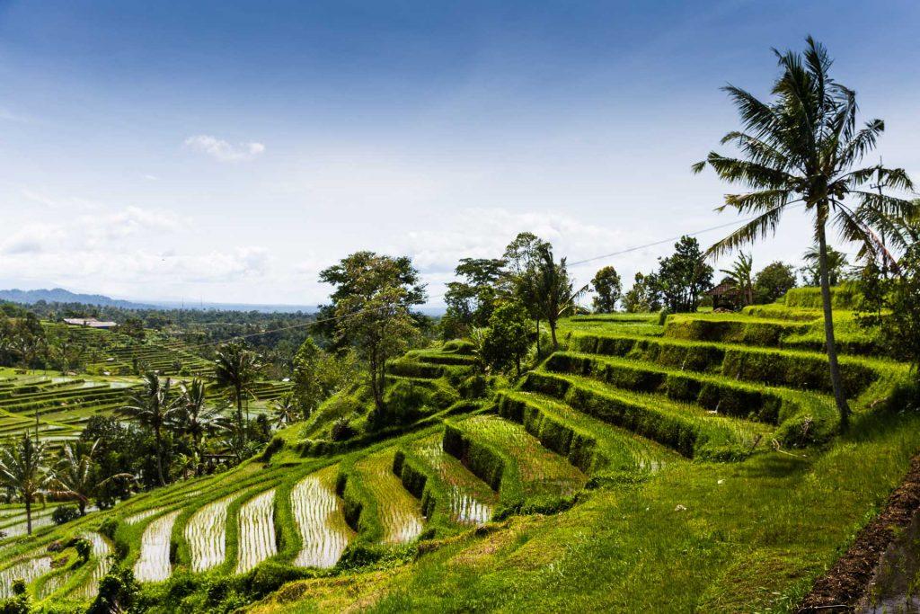 BlueSkyTraveler.Bali_.Jatiluwah-1