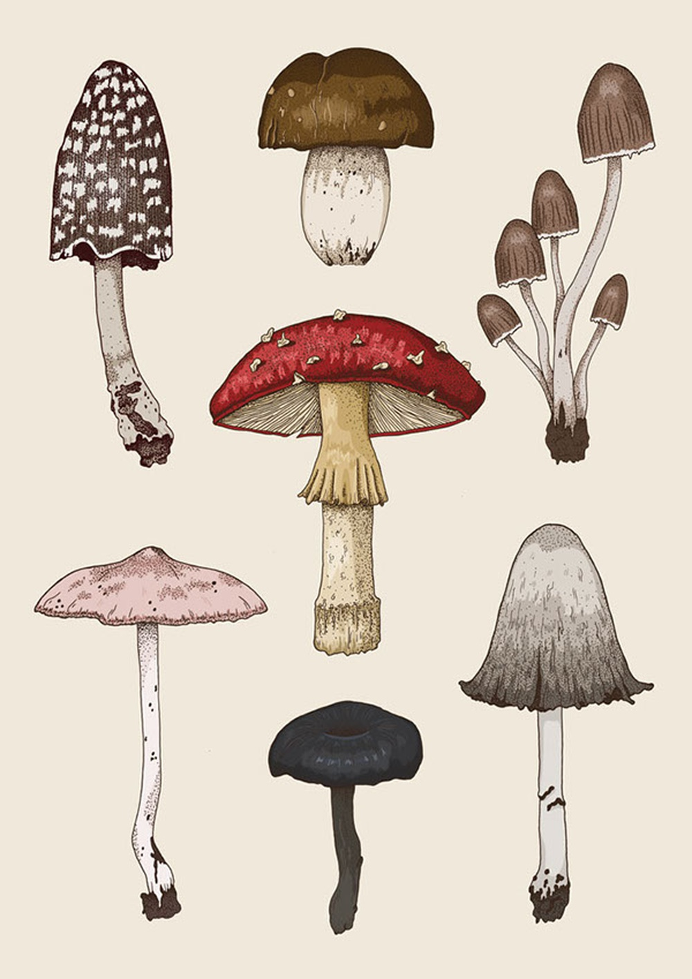 Mushrooms are great recyclers of the world