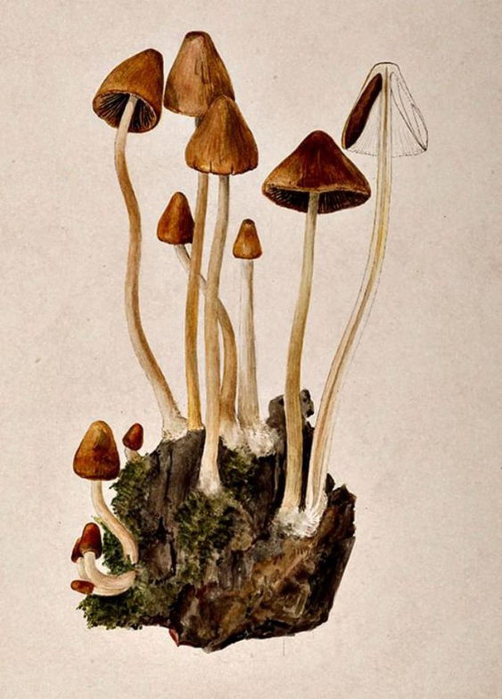 "Mushrooms are ""the magic food"""