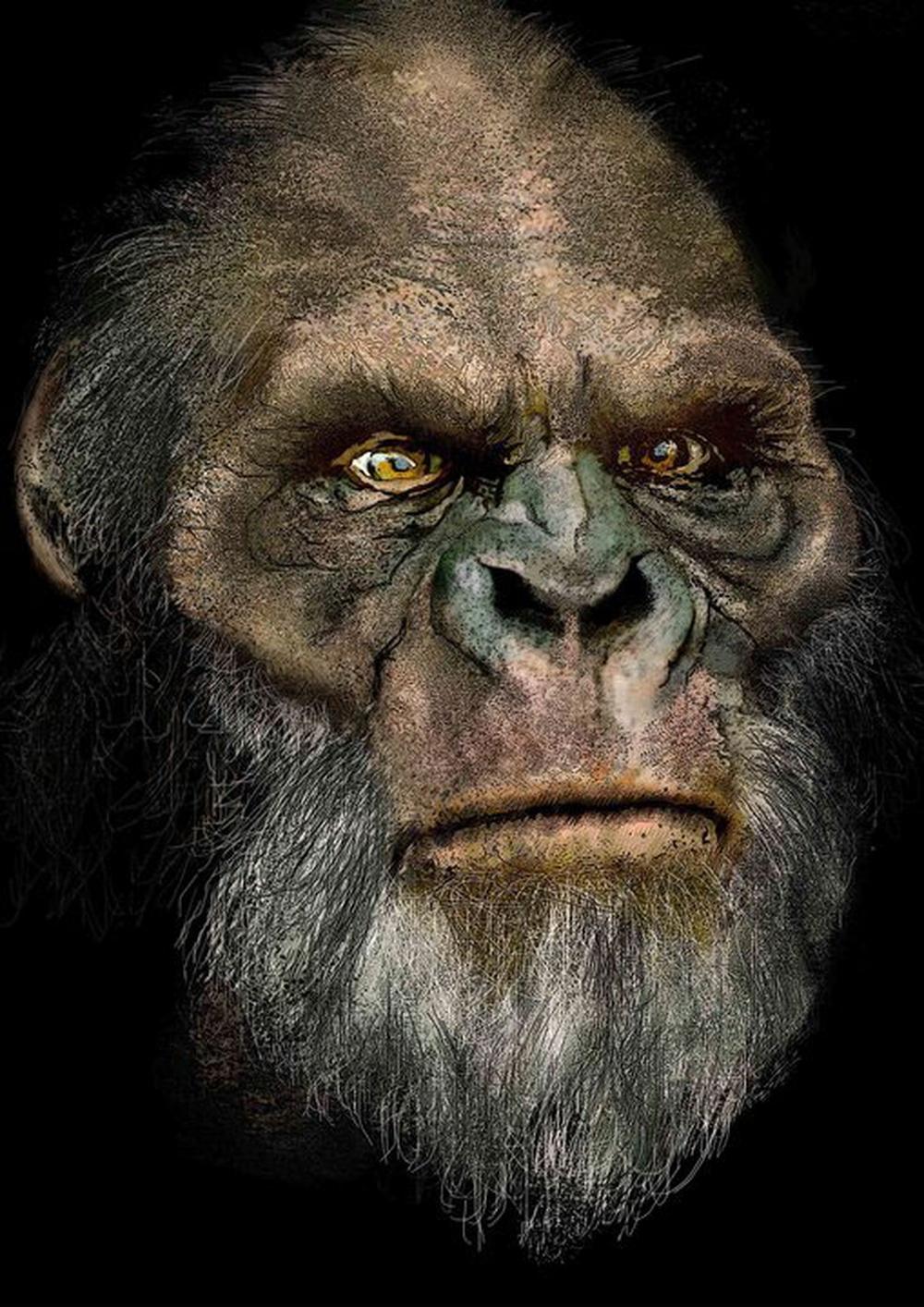 Nous faisons partie d'une grande famille particulièrement bruyante appelée les grands singes