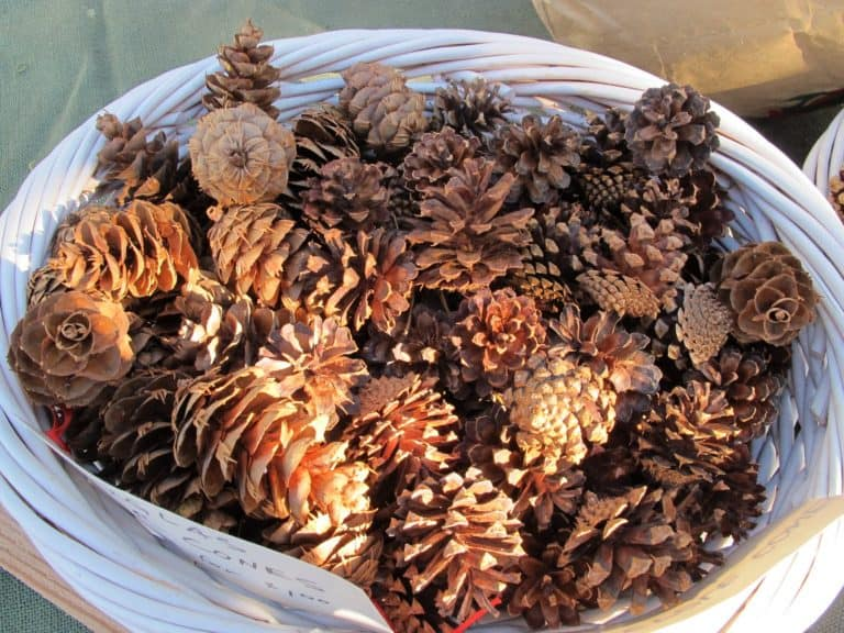 using pine cones as air freshener