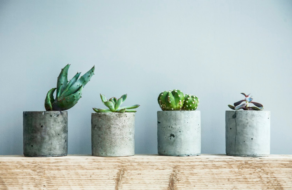 Easy Indoor Plants - Succulents and Cactus