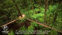 Redwoods Treewalk & Nightlights Experience By Day or Night within the famous Redwood Forest