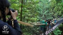 Family Pass: Redwoods Treewalk or Nightlights Experience