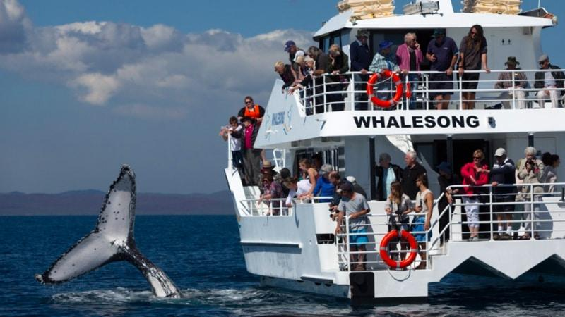 Spend up to 5 hours out on the waters of Hervey Bay searching for whales during this unforgettable boat tour. Listen to the expert commentary from your guide and enjoy a delicious meal onboard.
