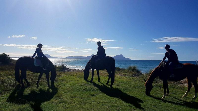 Feel at one with nature and discover beautiful Northland and its pristine Uretiti Beach by horseback with a 90 minute boutique horse riding adventure!