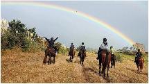 Northland 90 Minute Horse Trekking Experience