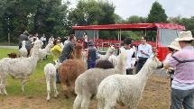 The Farm Tour and Sheep Shearing Show ( Rotorua Heritage Farm)
