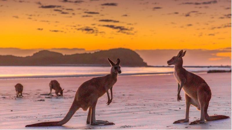 Roos sunrise