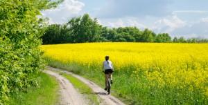 Bike in yellow field back view
