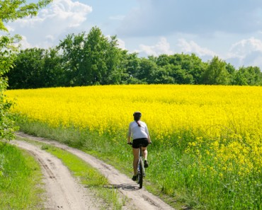 Bike in yellow field back view