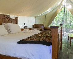 glamping unbranded