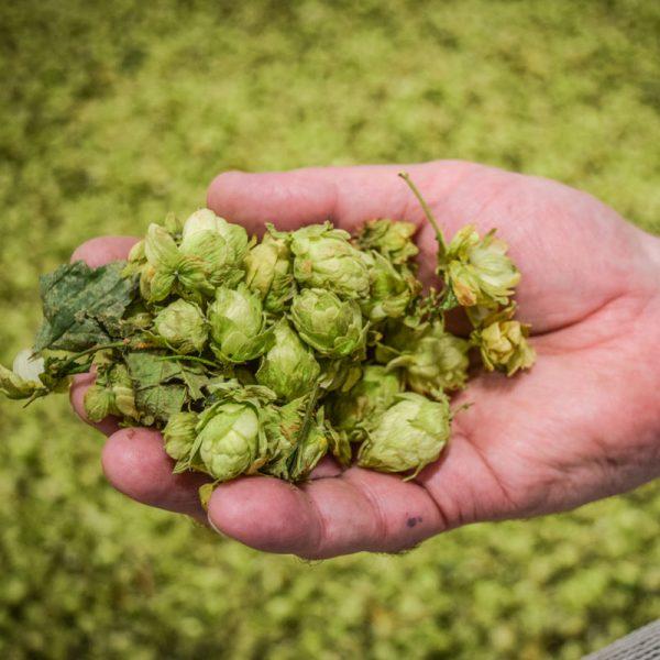 Brewers Association Supplier Membership